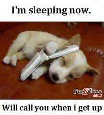 Dog Jokes Meme - likeable dog jokes funny meme