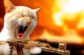 Mad Kitty Meme - mad cat meme find make share gfycat gifs