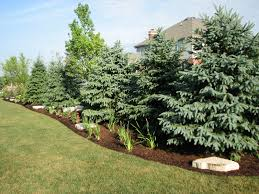 privacy landscape ideas existing home landscaping elemental