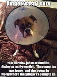 boxer dog meme boxer imgflip