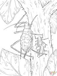green pea aphid coloring page free printable coloring pages