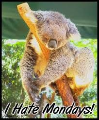 Koala Bear Meme - sleepy koala hate mondays glitter graphic greeting comment meme