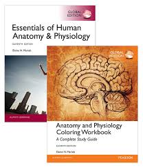 Human Anatomy And Physiology Textbook Online Value Pack Essentials Of Human Anatomy U0026 Physiology Global Edition