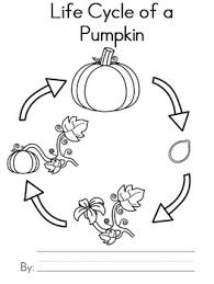 free pumpkin life cycle writing activity by teaching with nancy