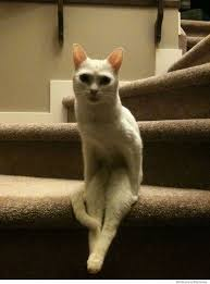 Cat Sitting Meme - cat sitting upright on the stairs weknowmemes