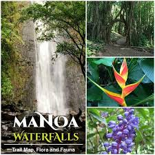 Hawaii nature activities images Rainforest manoa falls trail with hawaii best activities
