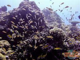 scuba diving the gili islands feetdotravel