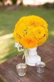 teddy sunflowers flower of the month teddy sunflower flowers
