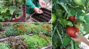 wonderful growing vegetable garden tips for growing a vertical