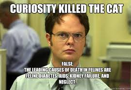 Diabetes Cat Meme - curiosity killed the cat false the leading causes of death in