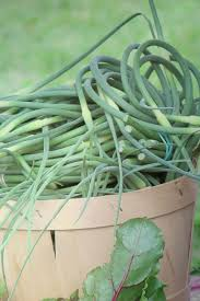 growing your own garlic planting growing harvesting and storing