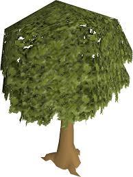 oak tree school runescape wiki fandom powered by wikia