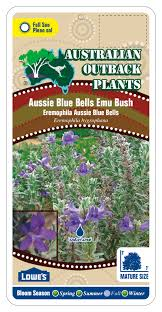 native plants south australia australian native plant nursery u2014 australian outback plants