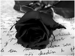 White Roses For Sale 10 Black Roses For Sale Desktop Backgrounds Hdflowerwallpaper Com