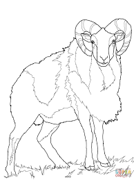 wild sheep mouflon coloring page free printable coloring pages