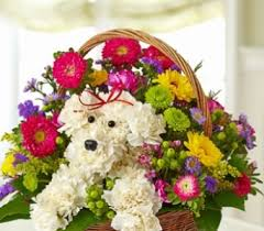 flower delivery colorado springs get well flowers delivery colorado springs co s flowers gifts