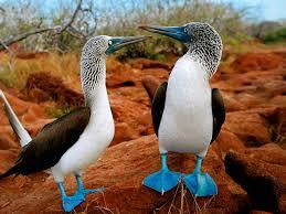 a look at birds page 2 backyard galah cam