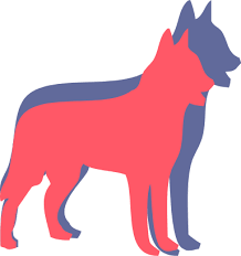 belgian malinois competition belgian malinois dog breed health history appearance