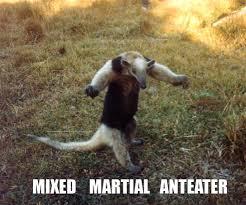 Anteater Meme - image 746 i m an anteater know your meme
