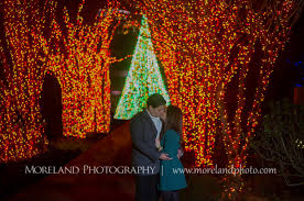 atlanta botanical garden lights atlanta botanical gardens christmas proposal derek chelsea