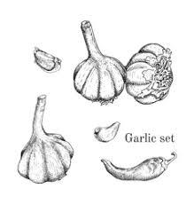 hand drawn celery ink sketch royalty free vector image