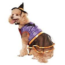 Martha Stewart Dog Halloween Costumes Martha Stewart Witch Costumes Dogs Ebay