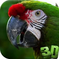 3d Vidio Parrot 3d Video Live Wallpaper Android Apps On Google Play