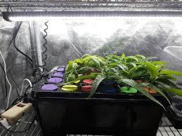 Grow Lights For Indoor Herb Garden - news u2013 page 2 u2013 cirrus led grow lights
