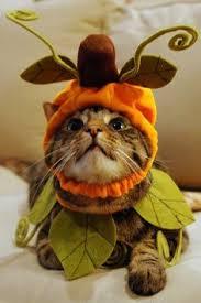 Halloween Costume Cat Dressed Yoda Cat 28 Halloween Costumes Cats
