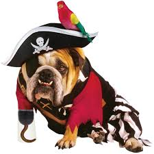 great dog halloween costumes pirate costumes for dogs halloween wikii