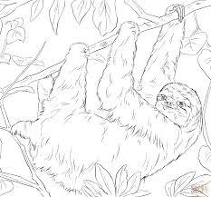 sloth coloring page clip art sloth coloring page breadedcat free