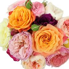roses wholesale garden roses assorted colors