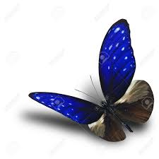 flying striped blue butterfly with shadow on