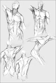 Human Male Anatomy 18 Best Anatomical Drawings Images On Pinterest Anatomy Drawing
