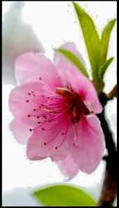 945 best beautiful flowers images on pinterest beautiful flowers