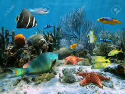 coral garden with starfish and colorful tropical fish caribbean