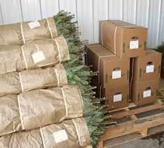 read how growing christmas trees takes time and effort