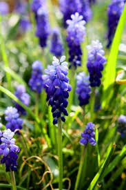image of spring flowers spring flower images free stock photos download 13 757 free stock