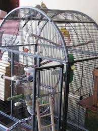 how to set up a bird cage for a cockatiel parakeet or parrot