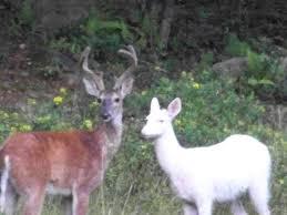 West Virginia wild animals images 184 best west virginia wildlife and animals images jpg