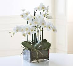 faux orchids faux orchid phalaenopsis arrangement in square vase pottery barn