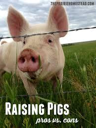 raising pigs pros u0026 cons the prairie homestead