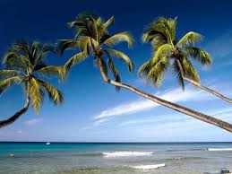 beach palm three sky blue beach nature water clouds trees