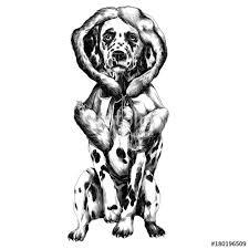 dalmatians with a fur coat sketch vector graphics monochrome black