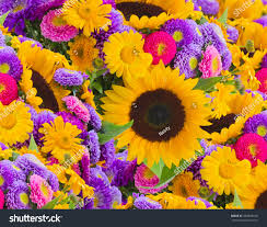 mums flower colorful sunflowers mums flower background stock photo 348628166