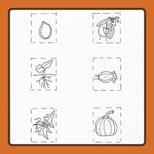 pumpkin cycle spinner plates squeeny