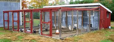 Best Backyard Chicken Breed by Poultry Housing 5 Essential Steps For Making Poultry Fantastic