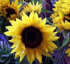 flower shops in colorado springs gentry s flowers