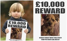 Simon Cowell Meme - simon cowell offers 10 000 reward to reunite boy with his stolen