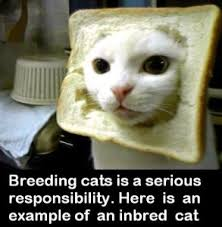 Soon Cat Meme - let s talk would you bread your cat catster